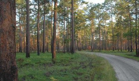 Southeast Conservation Finance Initiative