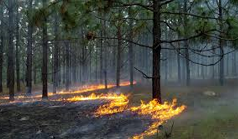Southeast Prescribed Fire Initiative