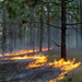 Southeast Prescribed Fire Initiative thumbnail